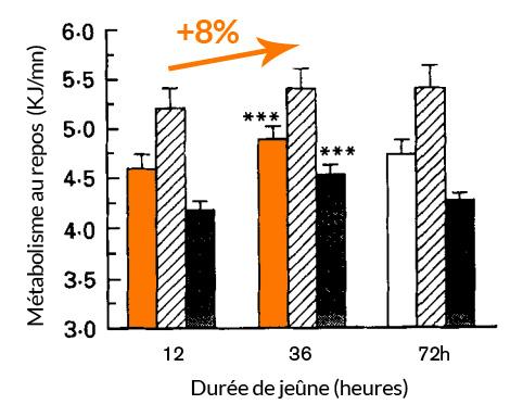 augmentation de métabolisme entre 12 et 36 heures de jeûne