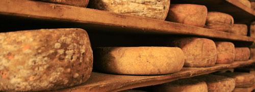 Les fromages crus à pâte dure : pleins de bonnes bactéries