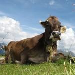Faut il avoir peur des produits laitiers ?